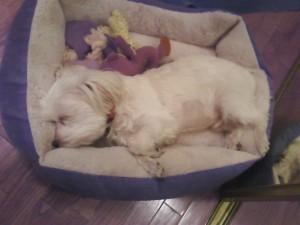 Sleepy Coady